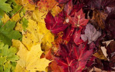 Alabama Symphony Orchestra: Vivaldi's Four Seasons Recomposed